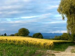 helfrantzkirch-paysage-2