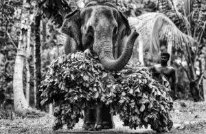2021-éléphant©Jean-François Mutzig